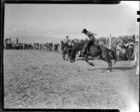 Cowboy saddle bronc riding at a rodeo at the Palm Springs Field Club, circa 1941