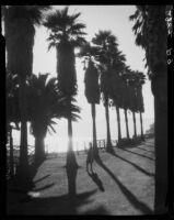 Woman watching sunset from Palisades Park, Santa Monica, 1939-1940