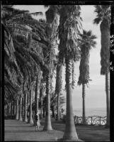 Woman looking towards the beach from Palisades Park, Santa Monica, 1939-1940