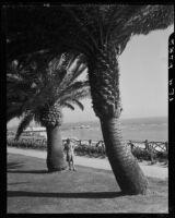 Woman next to a palm tree along the walkway at Palisades Park, Santa Monica, 1937-1946