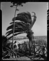 Woman next to a century plant and the eucalyptus branch fence at Palisades Park, Santa Monica, 1937-1950