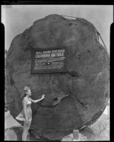 Woman next to California Big Tree cross section at Will Rogers State Beach, Santa Monica, 1946