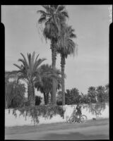 Carolyn Bartlett walking her bicycle past a walled garden, Palm Springs, 1940