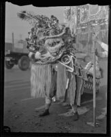 Chinese lion during festival in Chinatown, Los Angeles, circa 1920-1939