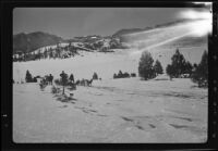 Sled dogs, men, and toboggan in snow, recovery operation, June Lake, 1938