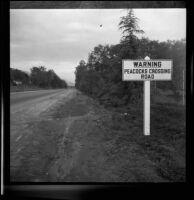 Road and sign, Rancho Santa Anita, Arcadia, 1938