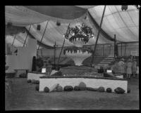 Grape exhibit at the Southern California Fair, Riverside, 1929