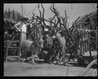 Man with pony and deer in front of a rustic animal pen at the Old Spanish Days Fiesta, Santa Barbara, 1932