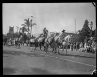 Gold Rush pack train in the parade of the Old Spanish Days Fiesta, Santa Barbara, 1930