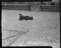 Burlesque bull fight in the Southern Pacific Stockyards, Los Angeles, 1922-1925