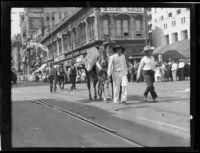 Burros in the Transportation Day parade at La Fiesta de Los Angeles celebration, Los Angeles, 1931