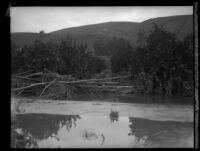 Orchard (?) immersed in water after the flood caused by the failure of the Saint Francis Dam, Santa Clara River Valley (Calif.), 1928
