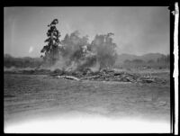 Burning wood debris in a field following the flood resulting from the failure of the Saint Francis Dam, Santa Clara River Valley (Calif.), 1928