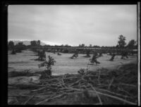 Agricultural field with mud and plant debris after the flood caused by the failure of the Saint Francis Dam, Santa Clara River Valley (Calif.), 1928
