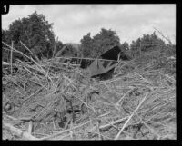 Building wreckage within matted tree debris left by the flood that followed the ruin of the Saint Francis Dam, Santa Clara River Valley (Calif.), 1928