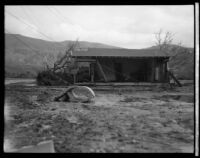 Damaged house following the failure of the Saint Francis Dam and resulting flood, Santa Clara River Valley (Calif.), 1928