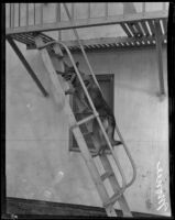 German shepherd Monee climbing fire escape ladder, Hollywood, Dec. 10, 1929