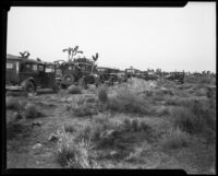 Automobiles in the Mojave Desert during a search for murder victim remains during the Gordon Stewart Northcott case, Riverside County, 1928-1929