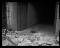 Cat at rubble-strewn doorway at the Hotel Carrillo after the earthquake, Santa Barbara, 1925