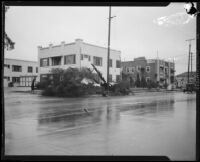 Residential street with toppled tree during or after a heavy rainstorm, Los Angeles County, 1927