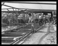 Kitty Kitabayashi, Bob Lowry, and K. Yamamoto prepare to move the Pacific Goldfish Farm, Westminster, 1935