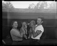 Zookeepers holding lion cubs at the California Zoological Gardens, Los Angeles, 1935