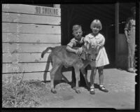 John Douglas Murphy and Marguerite Murphy with a calf at the Los Angeles County Fair, Pomona, 1935
