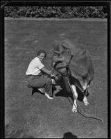 Cornelia Beversluis milks a cow, Pomona, 1934-1935