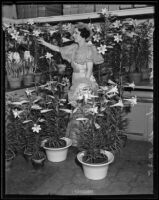 Miss Lillian Warde tending to potted lilies, Los Angeles, 1935