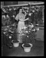 Miss Lillian Warde standing with a collection of potted lilies, Los Angeles, 1935