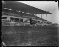"Race horse ""Bon Voyage"" at the Santa Anita Race Track, Arcadia, 1934-1940"