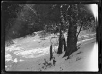 Snow-covered slope, circa 1920