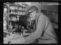 Will Connell (probably) using a microscope in his studio, Los Angeles, circa 1925