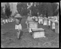 Young girl at a bee farm, Los Angeles County, 1935