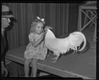 Joann Malcom and a Leghorn chicken, Los Angeles, 1936