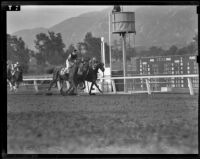 """Brass Bottle,"" ""Count Dean"" and ""Jack O'Spades"" finishing a race at Santa Anita Park, 1938"