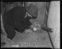 Detective Eugene Bechtel searches the property of William Spinelli, Los Angeles, 1938