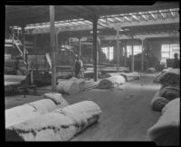 Rolls of batting for upholstery at the Roberti Brothers' furniture factory, Los Angeles, circa 1920-1930