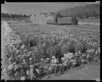 Tote board at Santa Anita Park, Arcadia, 1936