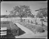 Paddock in front of the grandstand at Santa Anita Park, Arcadia, 1936