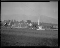"""Great Lover,"" ""Ima Count,"" ""Euryalis"" and ""Sundad"" finishing a race at Santa Anita Park, Arcadia, 1936"