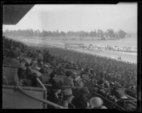 Box seat view of horses leaving the starting gate at Santa Anita Park, Arcadia, 1936