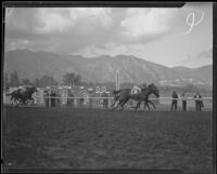 Horses racing at Santa Anita Park the month it opened, Arcadia, 1934