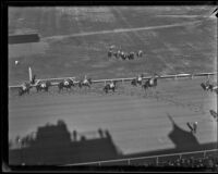 Birdseye view of race horses walking on the track at Santa Anita Park the month it first opened, Arcadia, 1934