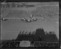 "Birdseye view of race horse ""Las Palmas"" winning the first race at Santa Anita Park on Christmas Day, Arcadia, 1934"