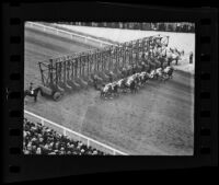Horses leaving the starting gate for a Christmas Day race at Santa Anita Park, Arcadia, 1935