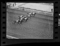 Horses racing at Santa Anita Park on Christmas Day, Arcadia, 1935