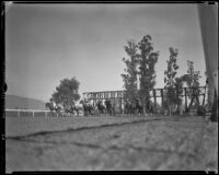 Horses leaving the starting gate for a Christmas Day the day Santa Anita Park first opened, Arcadia, 1935