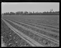 Plowed field at the Los Angeles County Farm, Downey, 192-1939