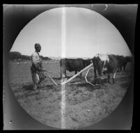Farm worker plowing a field, Kayseri, Turkey, 1891